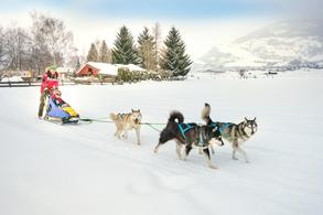 Sled dog rides (c) Tourist Office Piesendorf Niedernsill, Photo Harry Liebmann